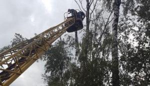 Применение автовышек при обрезке деревьев